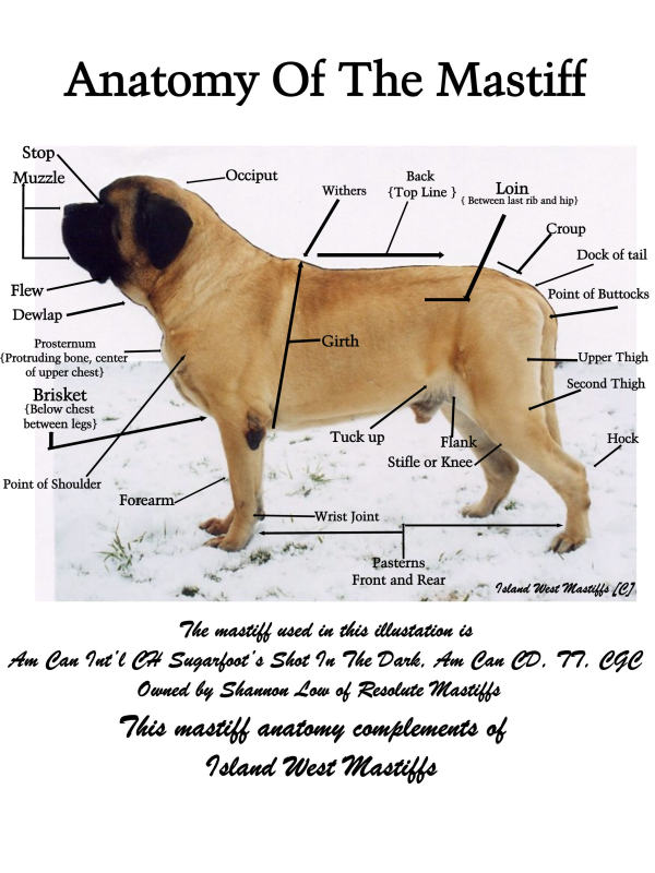 Large Dog Breed Weight Chart
